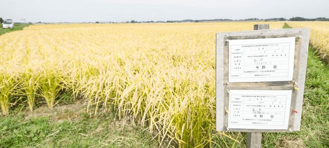環境保全型農業の推進及び環境保全米の積極的採用