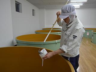 平成31年立春朝搾り 醪 仕込み12日目